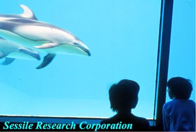 水族館イルカ-2-400pixcel.jpg
